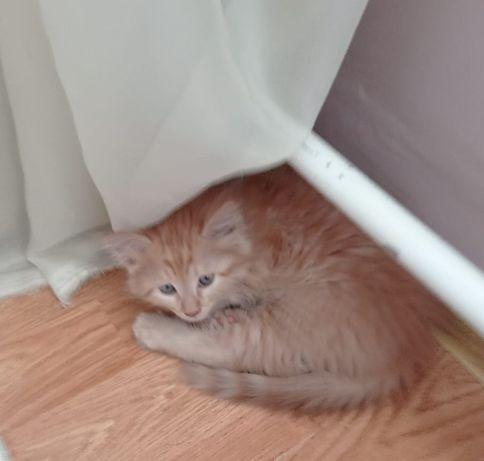 Котенок 4 месяца