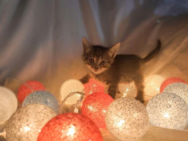Котенок ищет свой дом