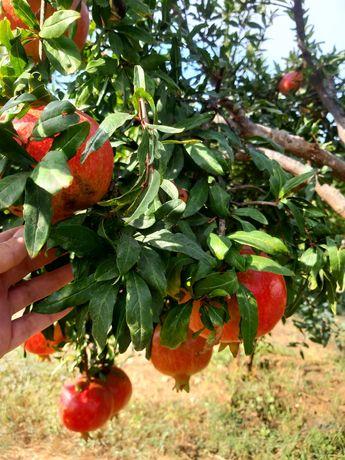Fructe ako wonderful rodiu lamai citrice