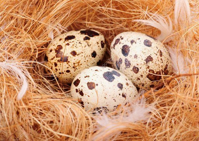 Домашние перепелиное яйцо
