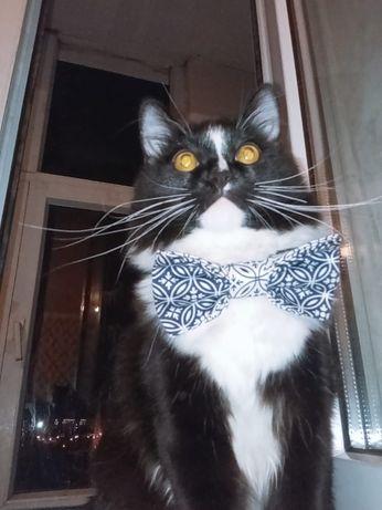 туреций ангорский кот ищет подругу!