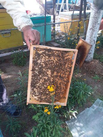 Roiuri sau familii de albine de vanzare