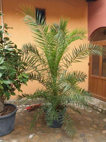 Specialități in plante Ornamentale
