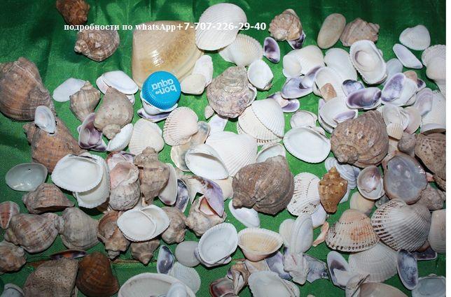 ракушки для аквариума и поделлок