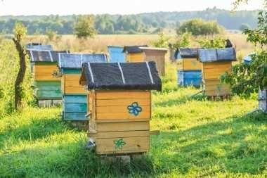 Stupi si familii albine