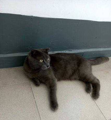 Красивый , дымчатый кот