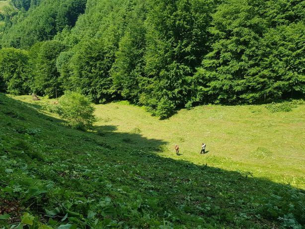 Curatam pasuni , terenuri, livezi  și spații împădurite