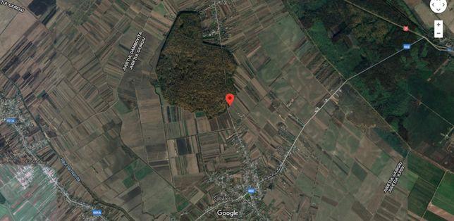 Sabareni - vand teren cu deschidere la padure 34ml