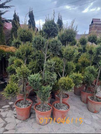 Vand plante ornamentale