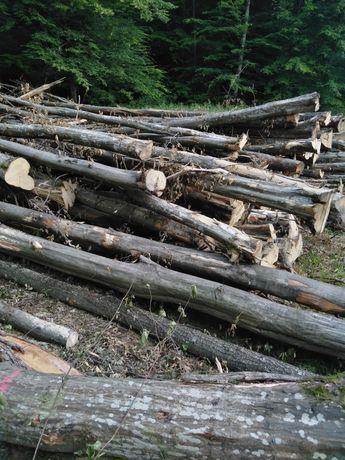 Vând lemne de foc cu transport inclus la metru sau tăiat lemne de fag