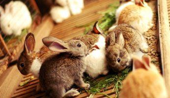 Крольчата - 1,5 мес, 4 мес