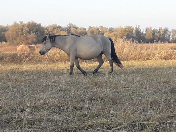 Продам лошадь с жеребёнком