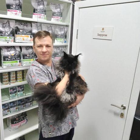 Ветеринарный врач на дом