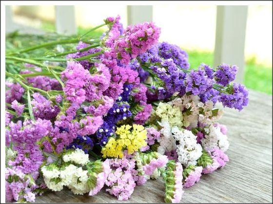 20seminte diverse flori, plante pt uscat aranjamente florale