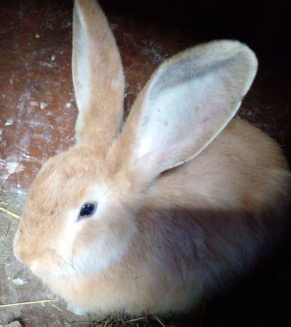 Кролики.4000т за одного