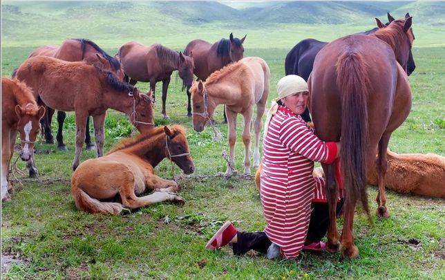 Лошадь, конь, кабыла. Сауын бие