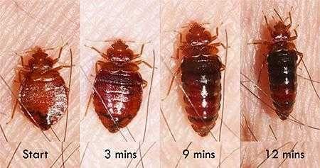 Дезинфекция Результат клопы муравьи тараканы клещи Шымкент