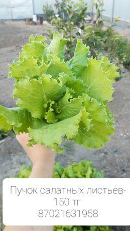Продам салатные листья