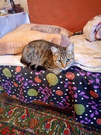 кошка охотница за всем что двигается