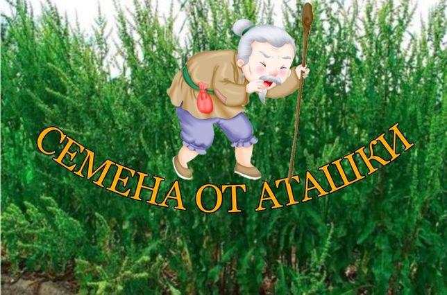 Семена кормовых, трава , РУМЕКС, Дача, скот,сено, семена от Аташки