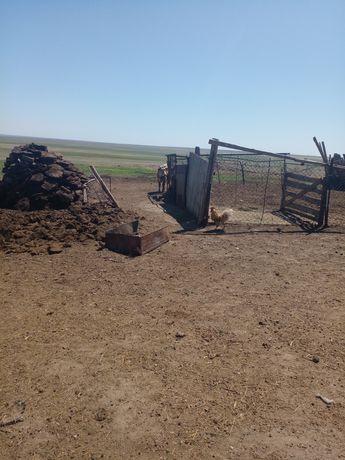 10 коров с телятами .