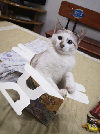 пропала кошка, нашедшему вознаграждение