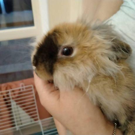 Продам кролика декоративного, вместе с клеткой