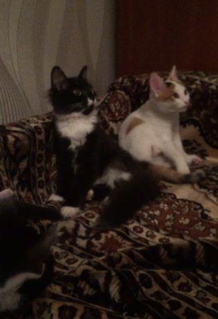 Отдам домашних котят в добрые руки!
