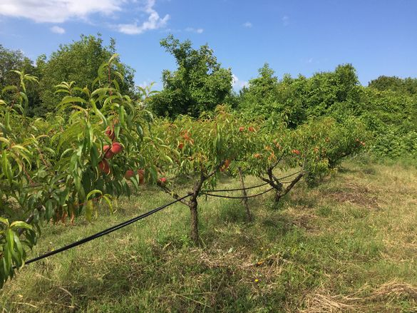 Овощна градина, земеделска земя за отдаване под аренда