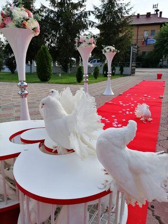 Porumbei albi și aranjamente evenimente .