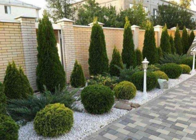 Plante ornamentele și gazon rulou verde