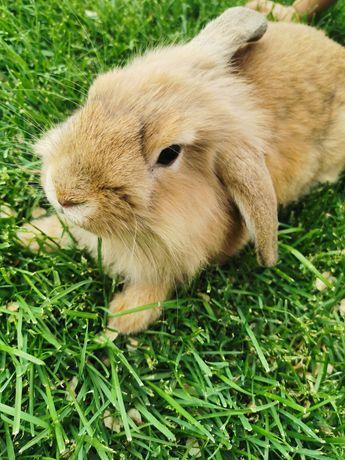 Продам декоративного кролика с клеткой