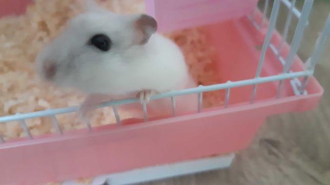 Hamster+ cusca+hrana si talaj