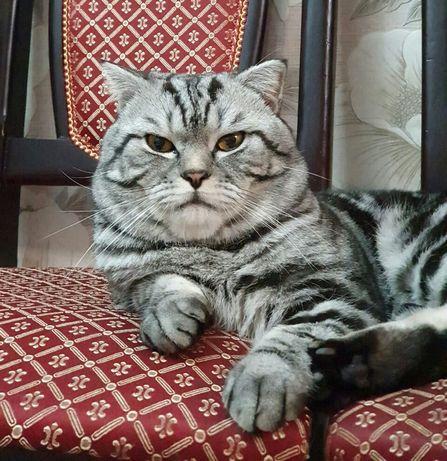 Вашей кошечке нужен котик!!!