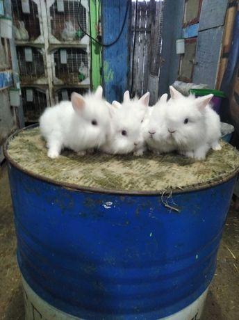 Cap de leu pui , iepuri pitici .