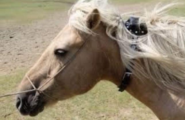 SPOT TRACE спутниковый GPS на лошадей