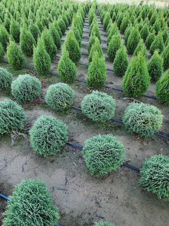 Plante ornamentale , gazon rulouri ,sisteme irigatii