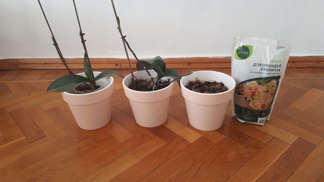 Цветы орхидея в горшках всё  на фото за 14000 тенге