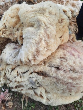 Vand lână de la  oi