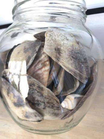 Морские ракушки в баночке