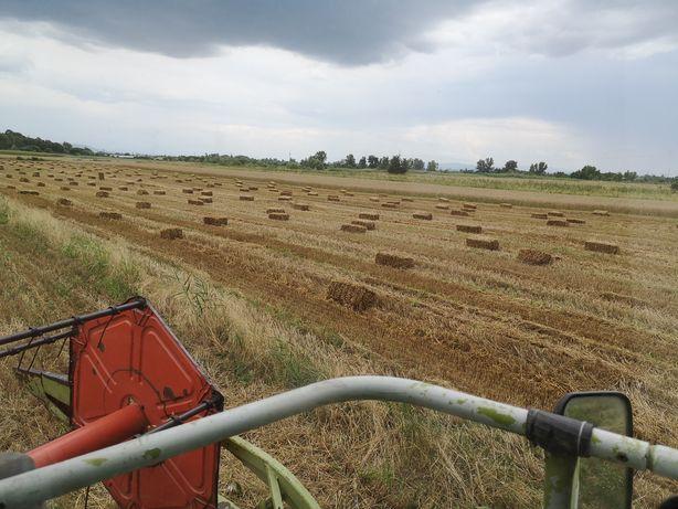 Baloți de paie de grâu 2020