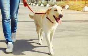 Plimb câini, Iasi zona centrală