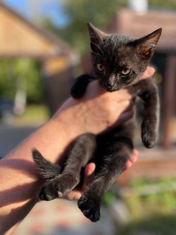 Отдам котёнка в добрые руки
