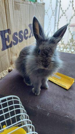 Продам декаротивного кролика