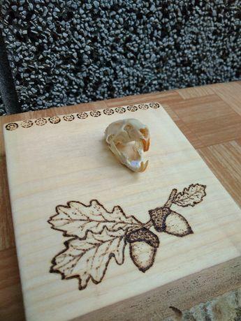 Малък трофей от дребен гризач с пирография жълъди