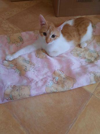 Котенок - рыжик в добрые руки