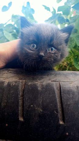 Отдам котят в хорошие добрые руки!
