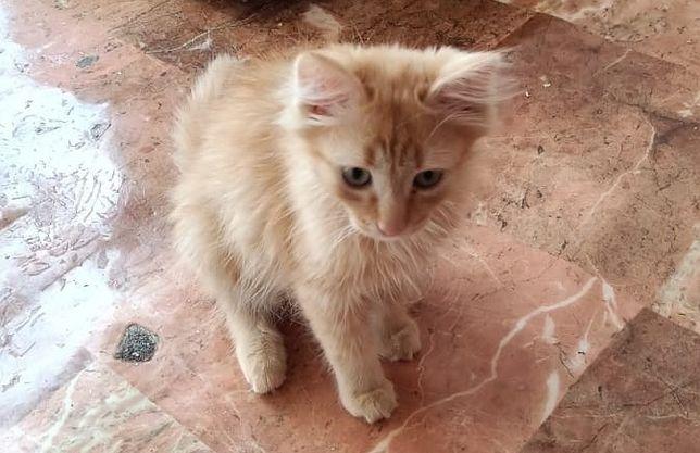 Рыжий красивый котик