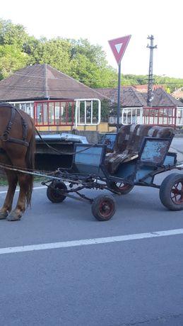 Trasura (docar) cai sau ponei