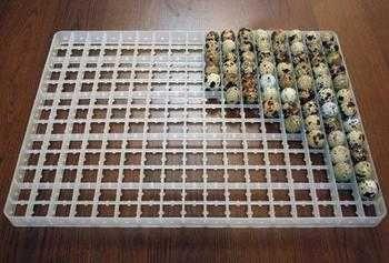 Лотки под перепелиные яйца